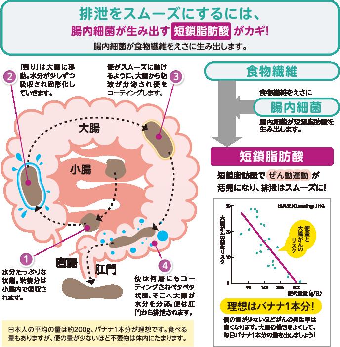 大腸内の排泄の流れ