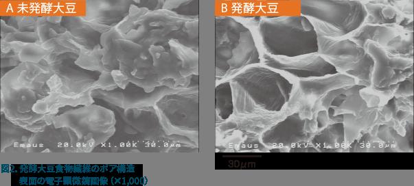 発酵大豆食物繊維のポア構造