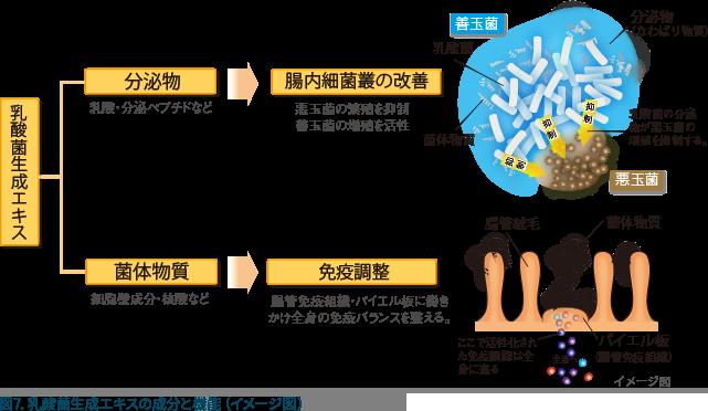 図7:乳酸菌生成エキスの成分と機能