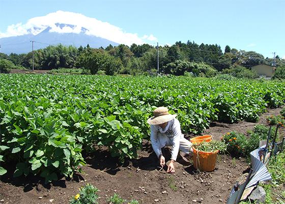 農薬不使用で栽培