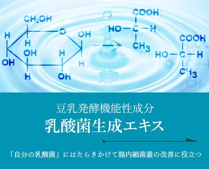 乳酸菌生成エキス
