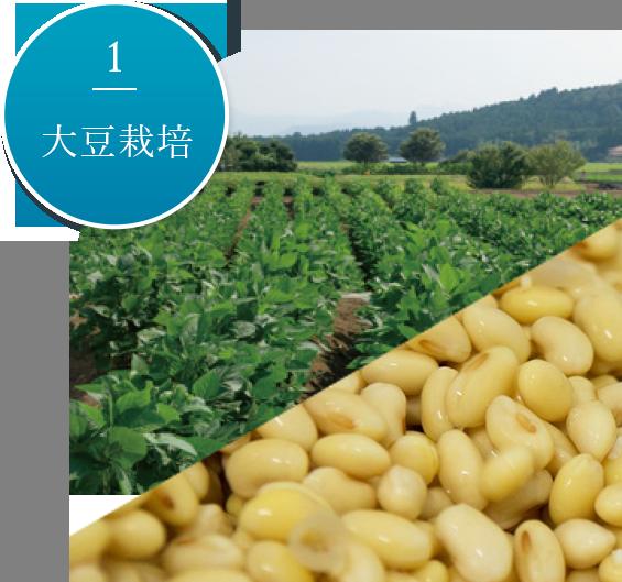 1.大豆栽培