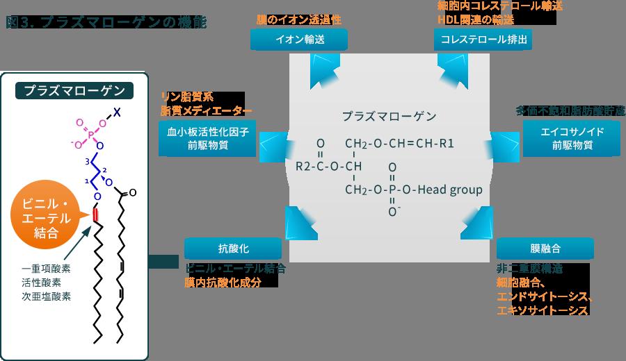 図3. プラズマローゲンの機能
