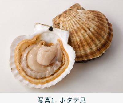 写真1. ホタテ貝