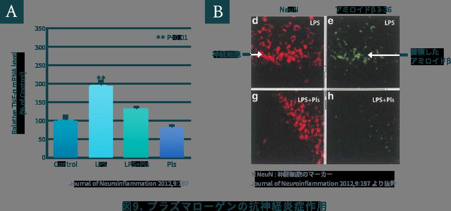 図9. プラズマローゲンの抗神経炎症作用